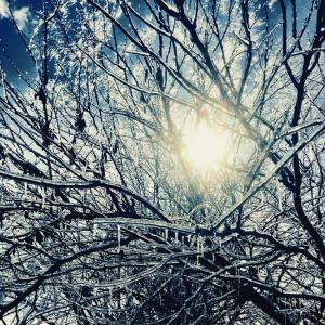 ice day walk